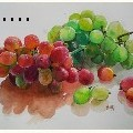 Uday Arts .... - grapes - Water Color