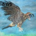 dusty laws - the golden eagle - Acrylics