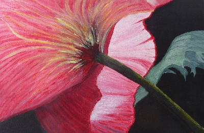Becca Kelly Poppies Coming and Going