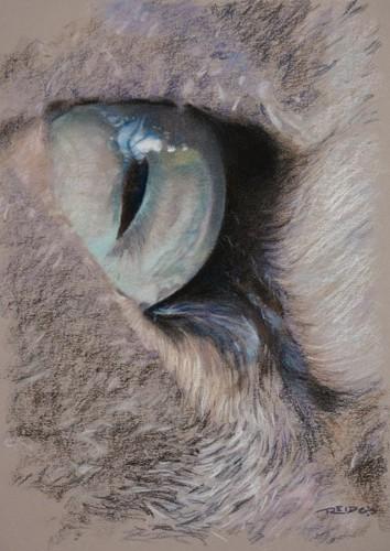 Urban Predator's Eye