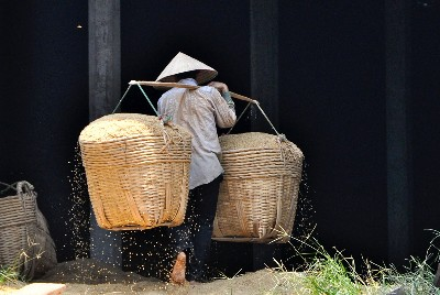 Cindy Pitou Burton Rice Carrier, Mekong Delta