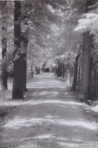Darrel Colville Country Lane