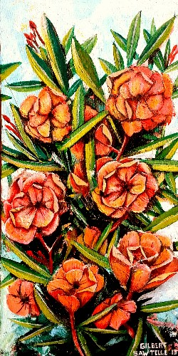 Galveston - Peach Blossom Oleander