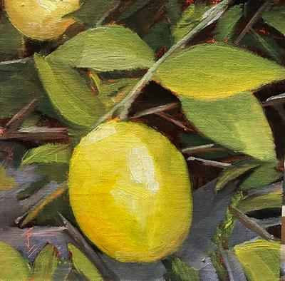 J Frederick Lemon Tree