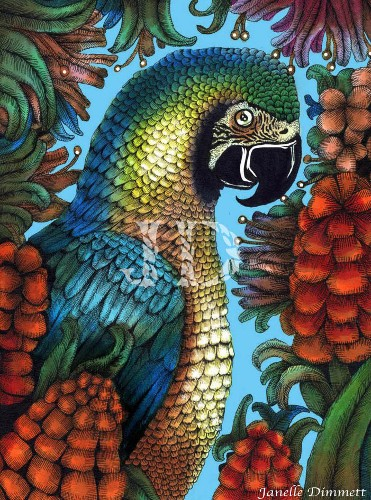 Parrot Drawing (Macaw)