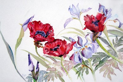 Poppies with Iris