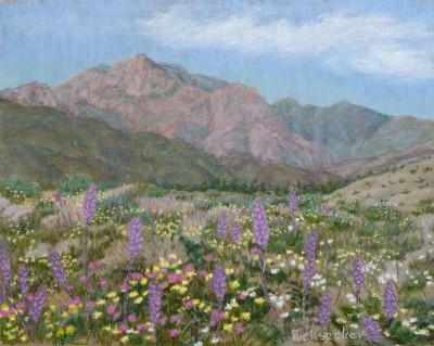 Lupine in Coyote Canyon