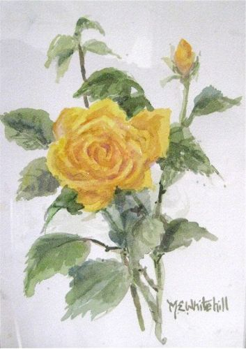 M. E. Whitehill Yellow Rose