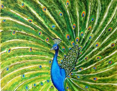 Glorious Peacock