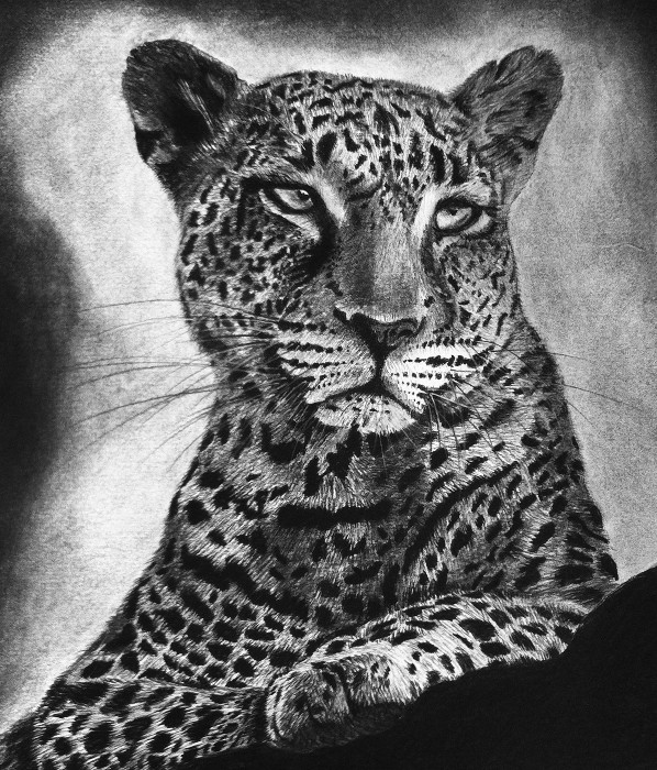 Nancy Tydings Bullough Leopard