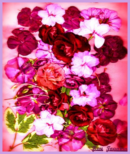 Valentine Flowers for You Everyday