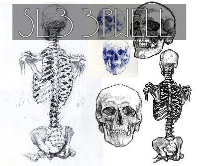 Traditional Anatomy