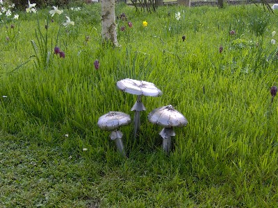 Stanger Moore Three toadstools