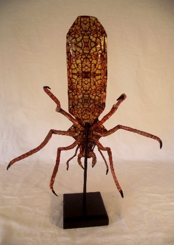 Cabinet of Curiosities Insect Specimen