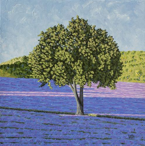A tree in the middle of the lavender field