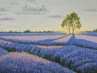 Lavender field with a tree, sunset in Provence