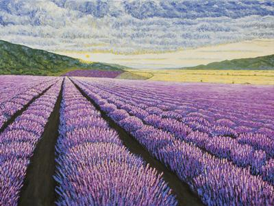 Lavender field with mountains on a background