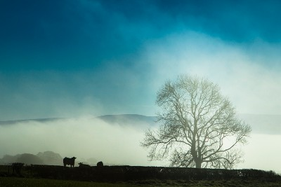 Tree and cow silhouette
